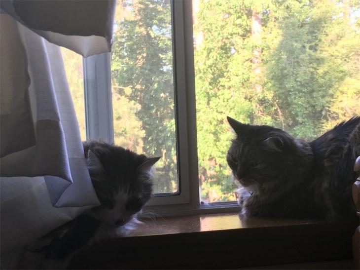 zeke opie cats