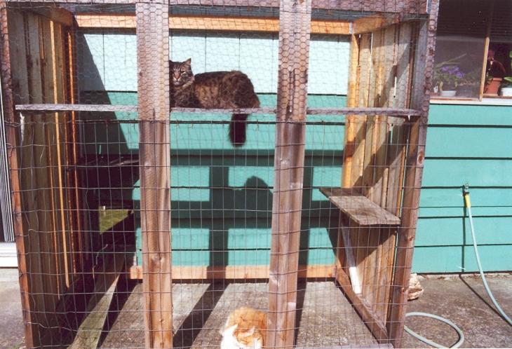 catio cats