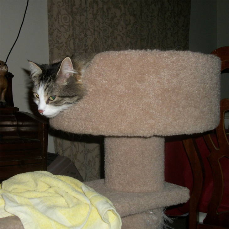 Zeke cat tree