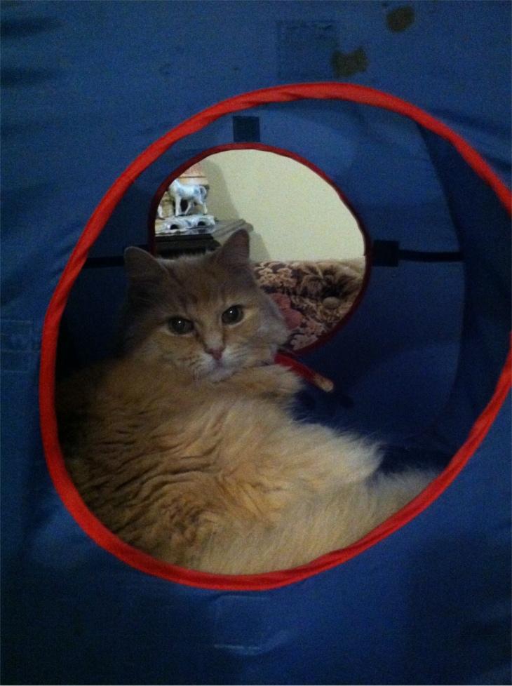 Marigold cat tent