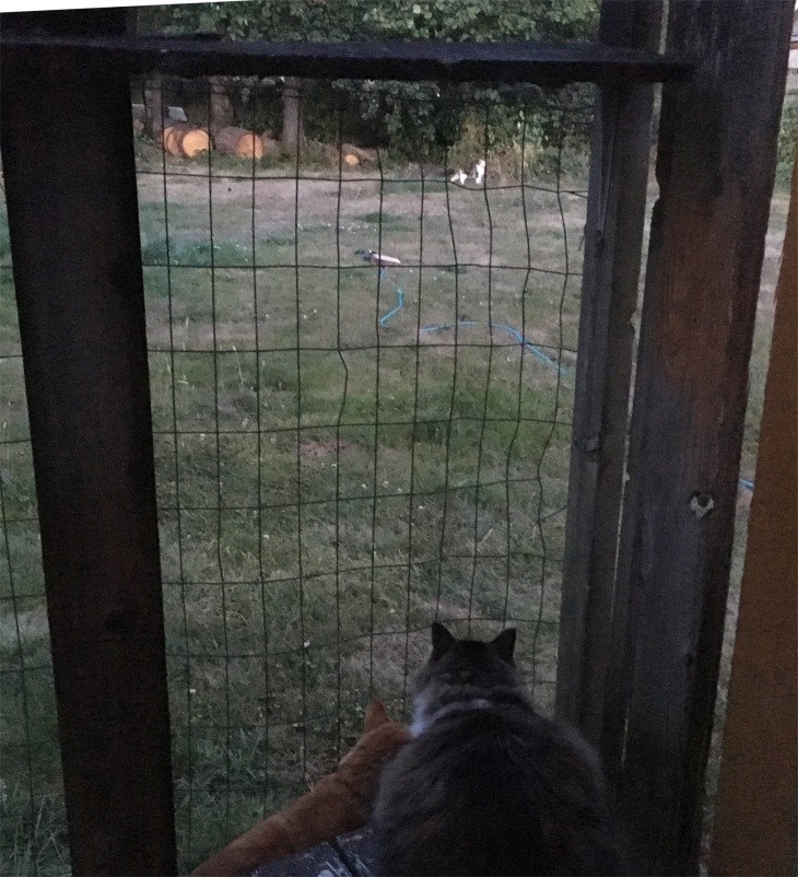 Zeke catio cat