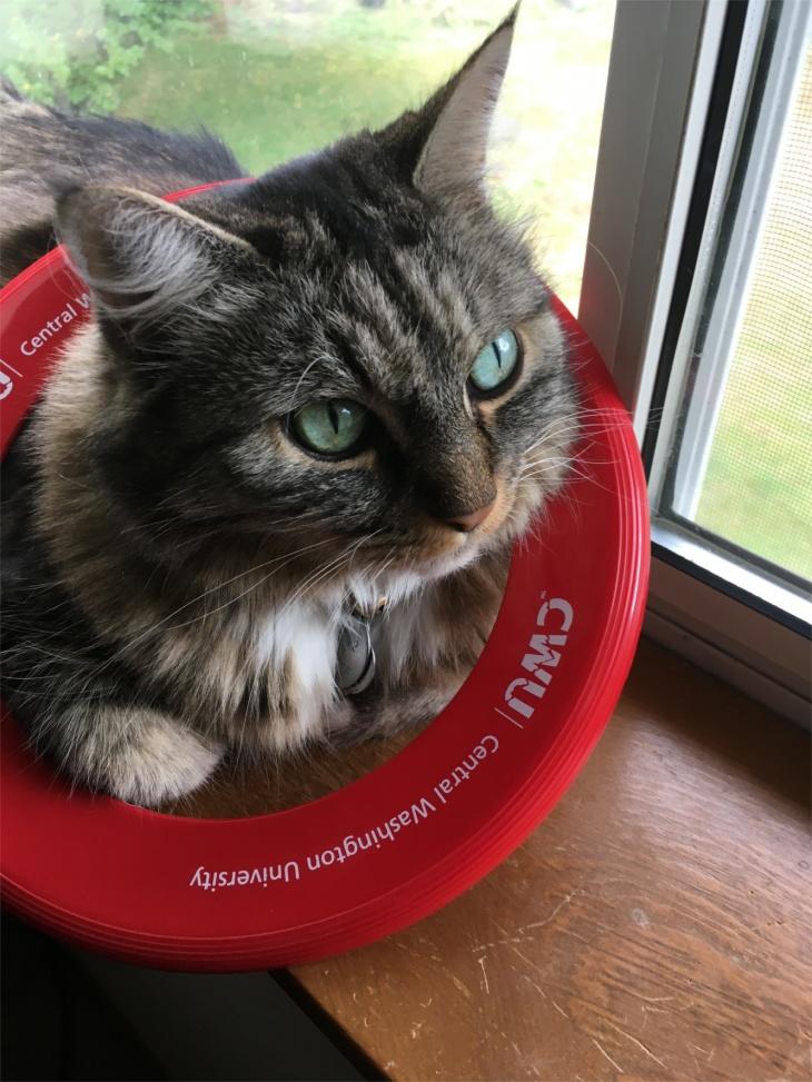 Opie frisbee
