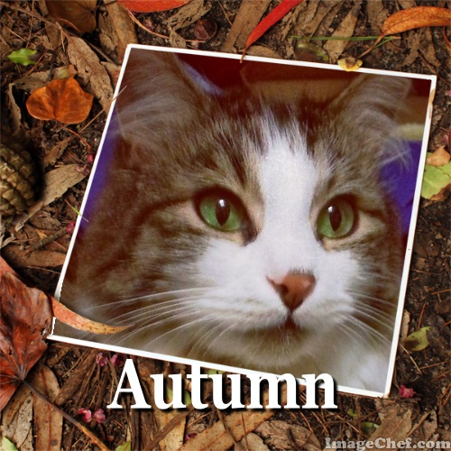 zeke cat autumn