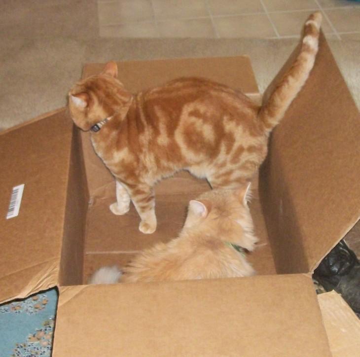 Scooby Marigold box