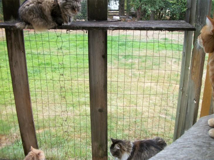 4 cats in caatio
