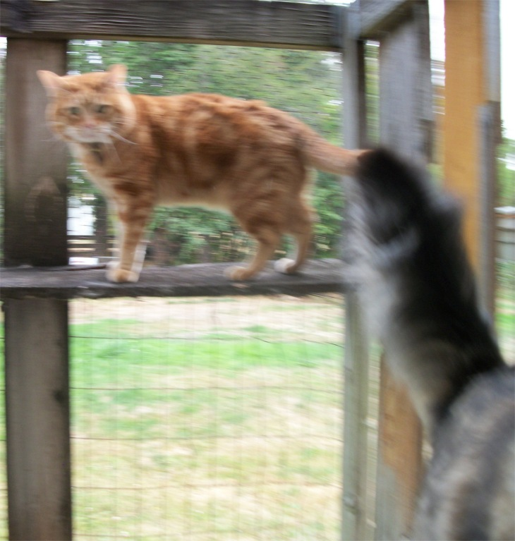 Opie attacks Scooby in catio