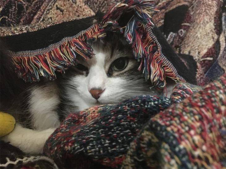 Zeke the gypsy
