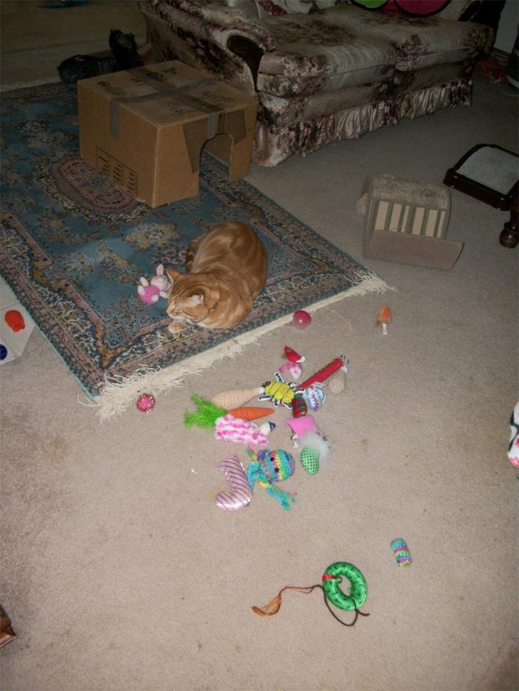 scooby cat cat toys