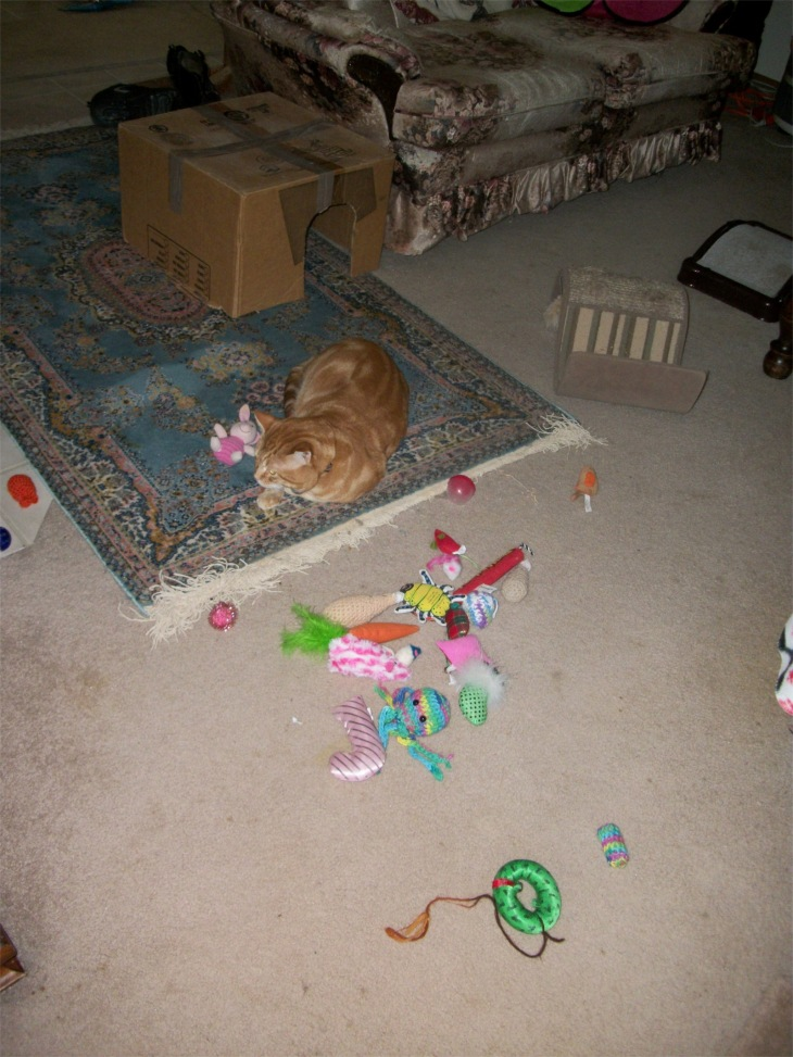 scooby cat cat toys