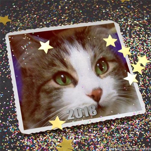 Zeke happy new year 2018