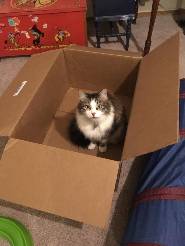 Zeke box