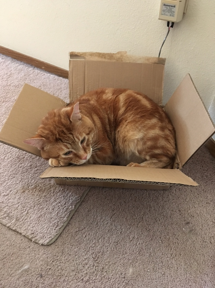 Scooby in box