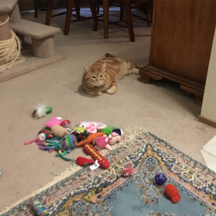 Scooby cat toys