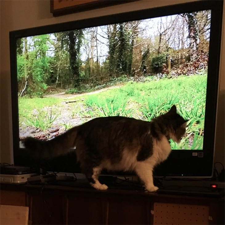 zeke cat tv