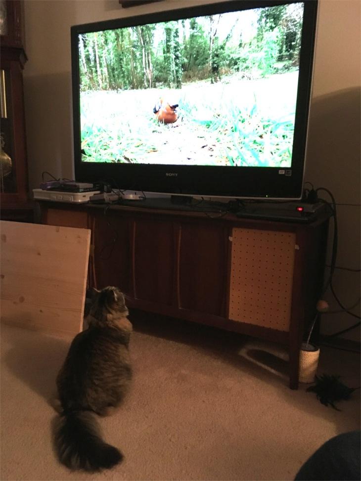 Opie cat tv