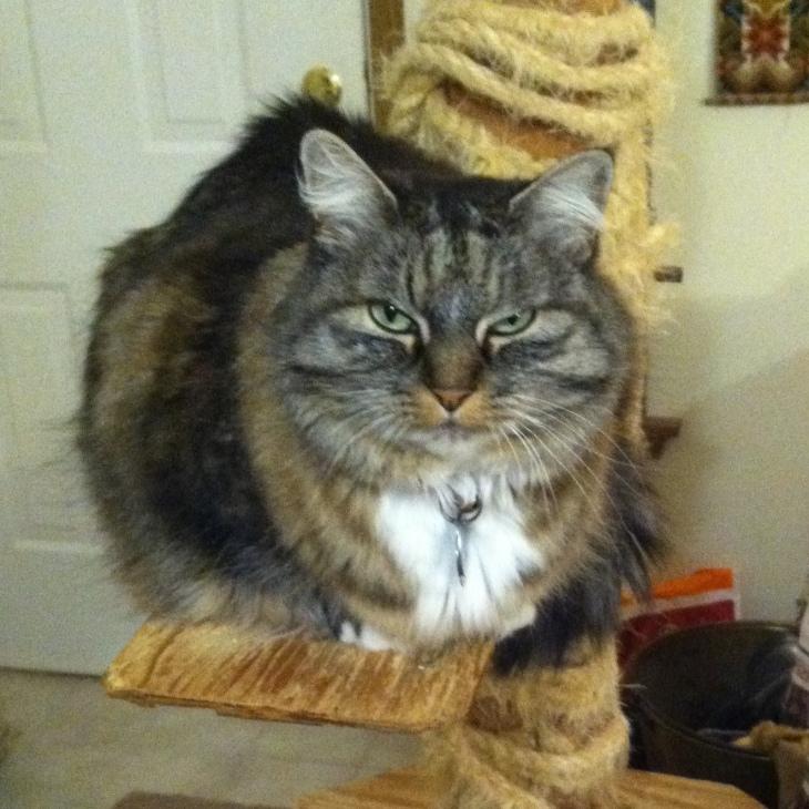 Opie cat