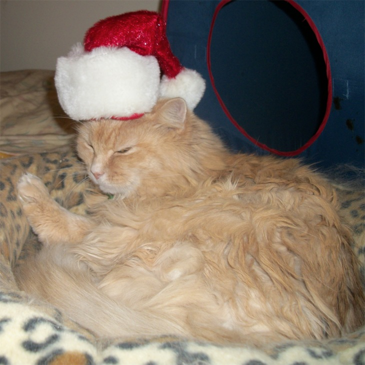 Marigold Santa Hat