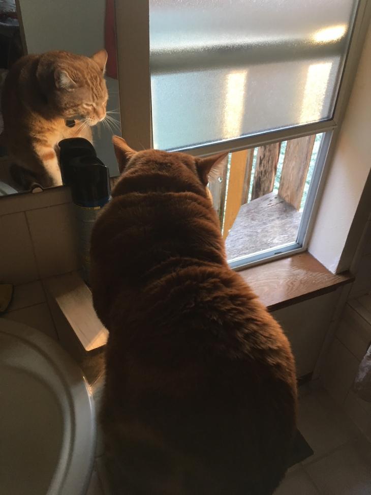 Scooby window