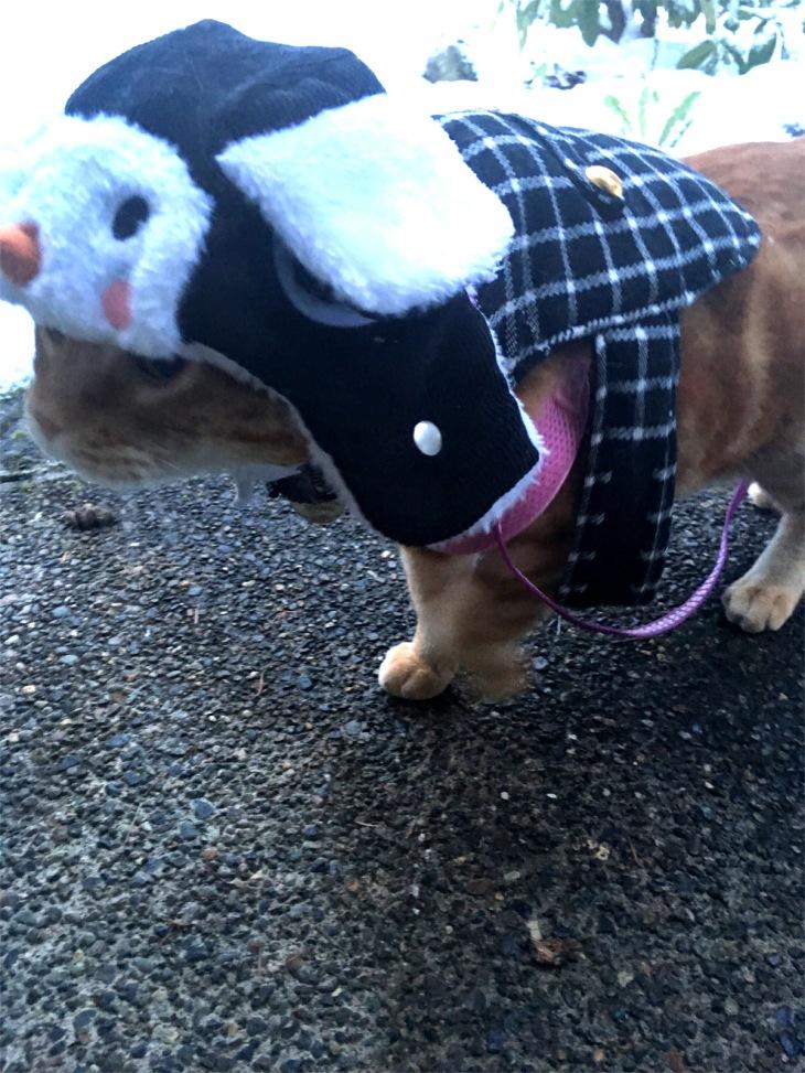 Scooby cat penguin hat