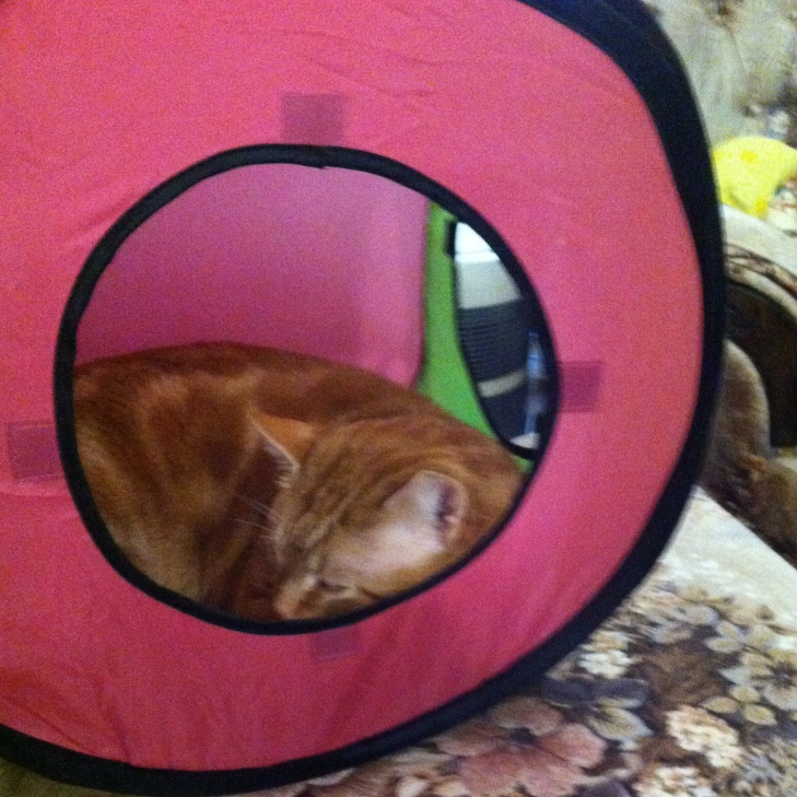 Scooby in tent sleeping