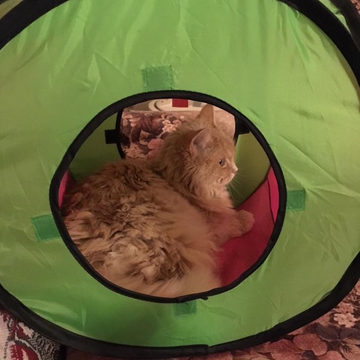 Marigold tent