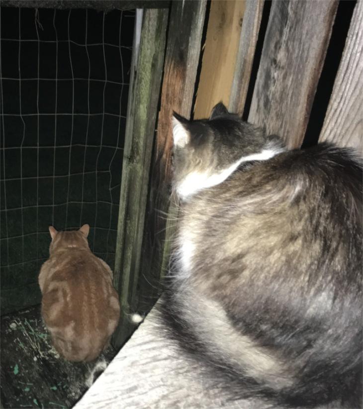 scooby zeke cats catio