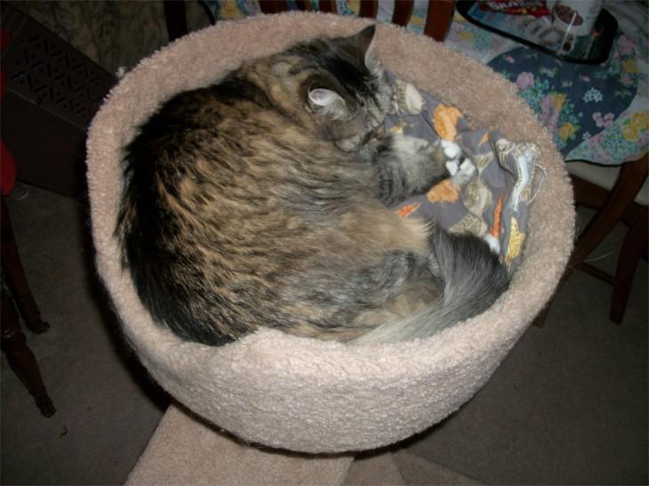 opie cat tree
