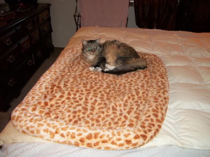 opie cat bed