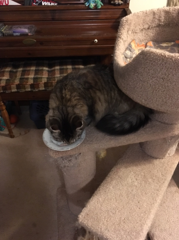 opie cat tree eating