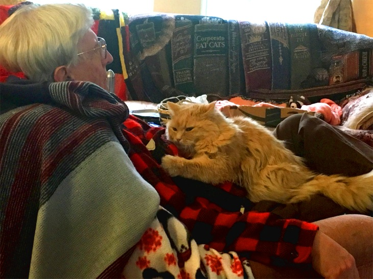 Greg Marigold cat