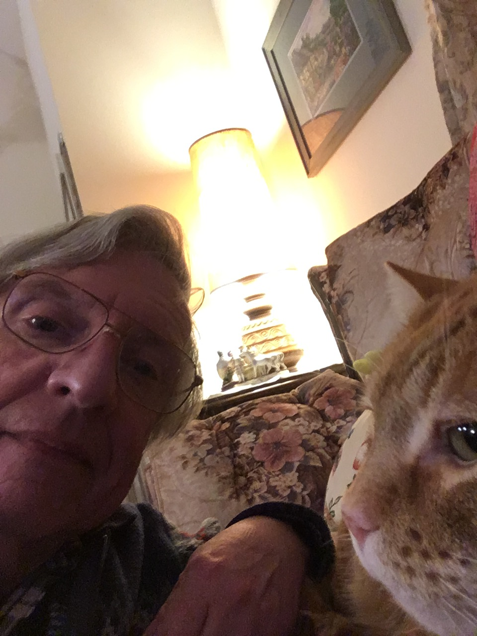 Greg Scooby cat selfie