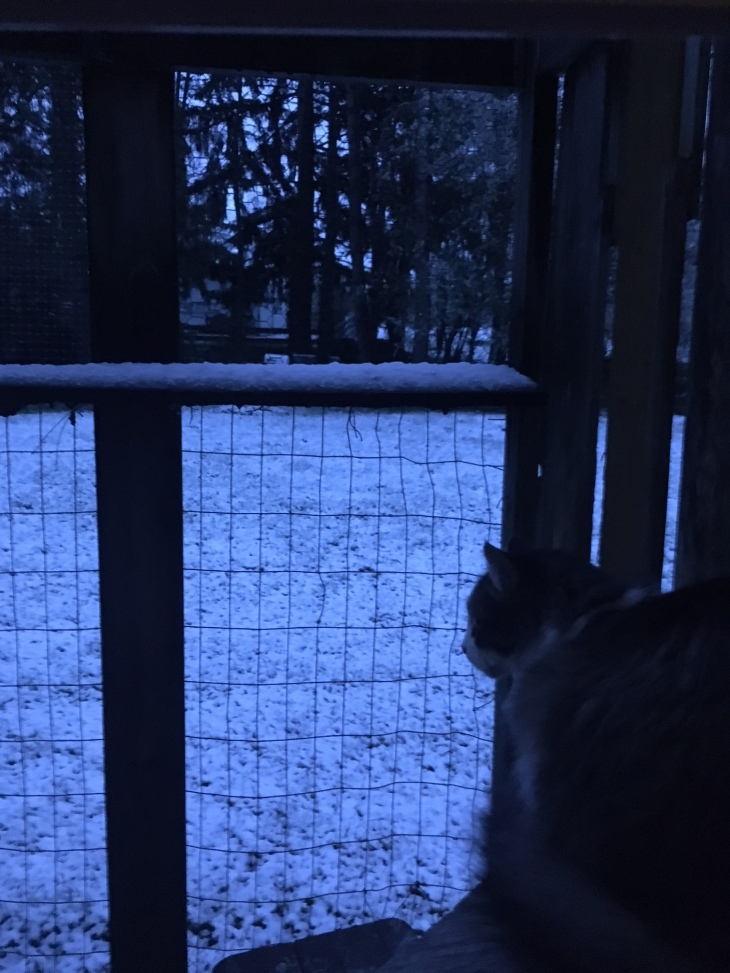 zeke snow catio