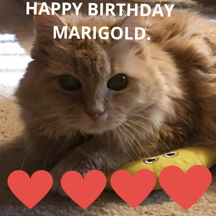 happy birthday marigold