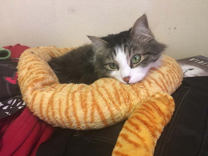 Zeke in cat bed