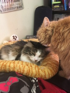 Zeke Marigold cats