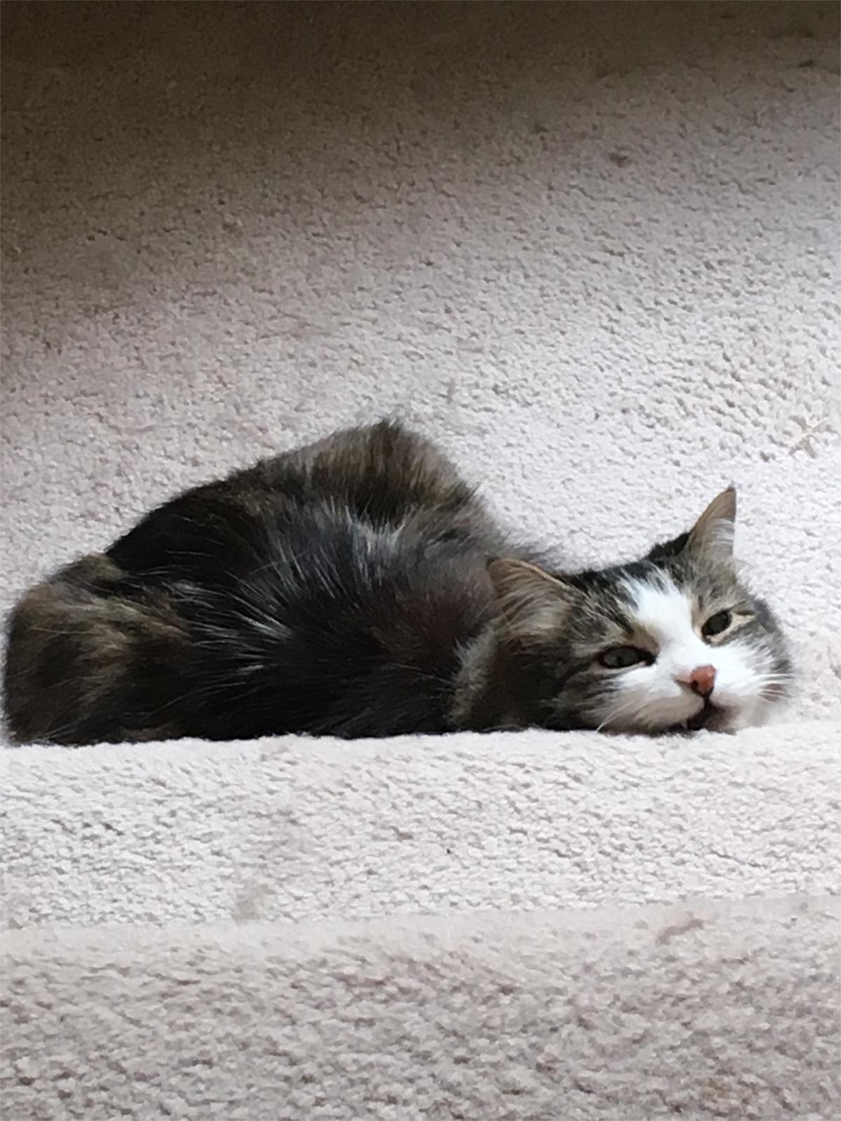 Zeke cat stairs