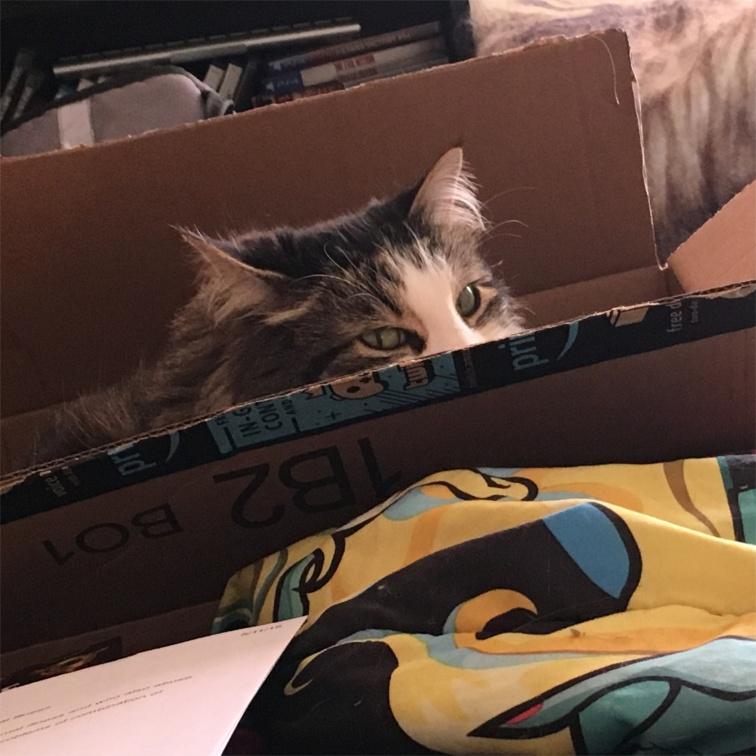 Zeke in box