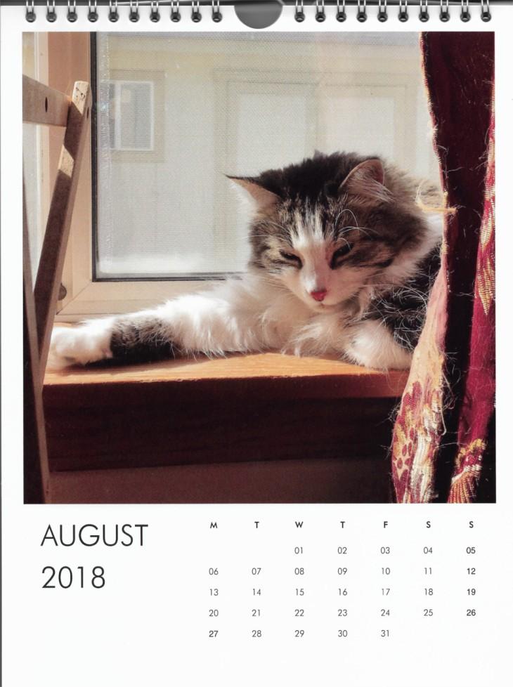 Zeke August Calendar Cat