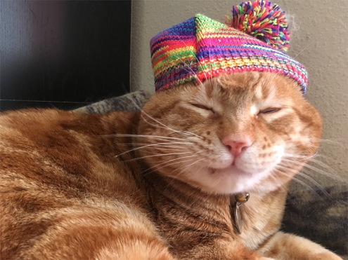 Scooby hat cat