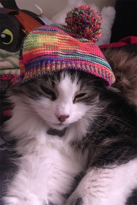 Zeke cat in hat