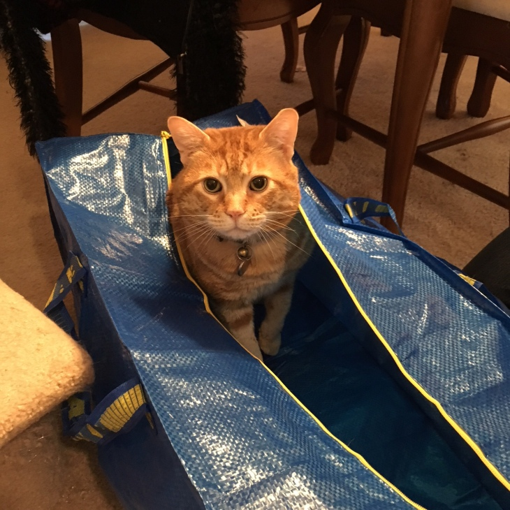 Scooby bag cat