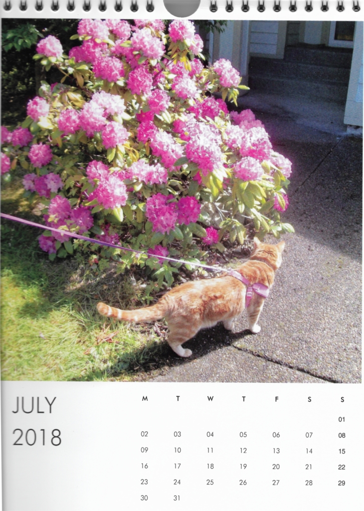 Scooby July Calendar Cat