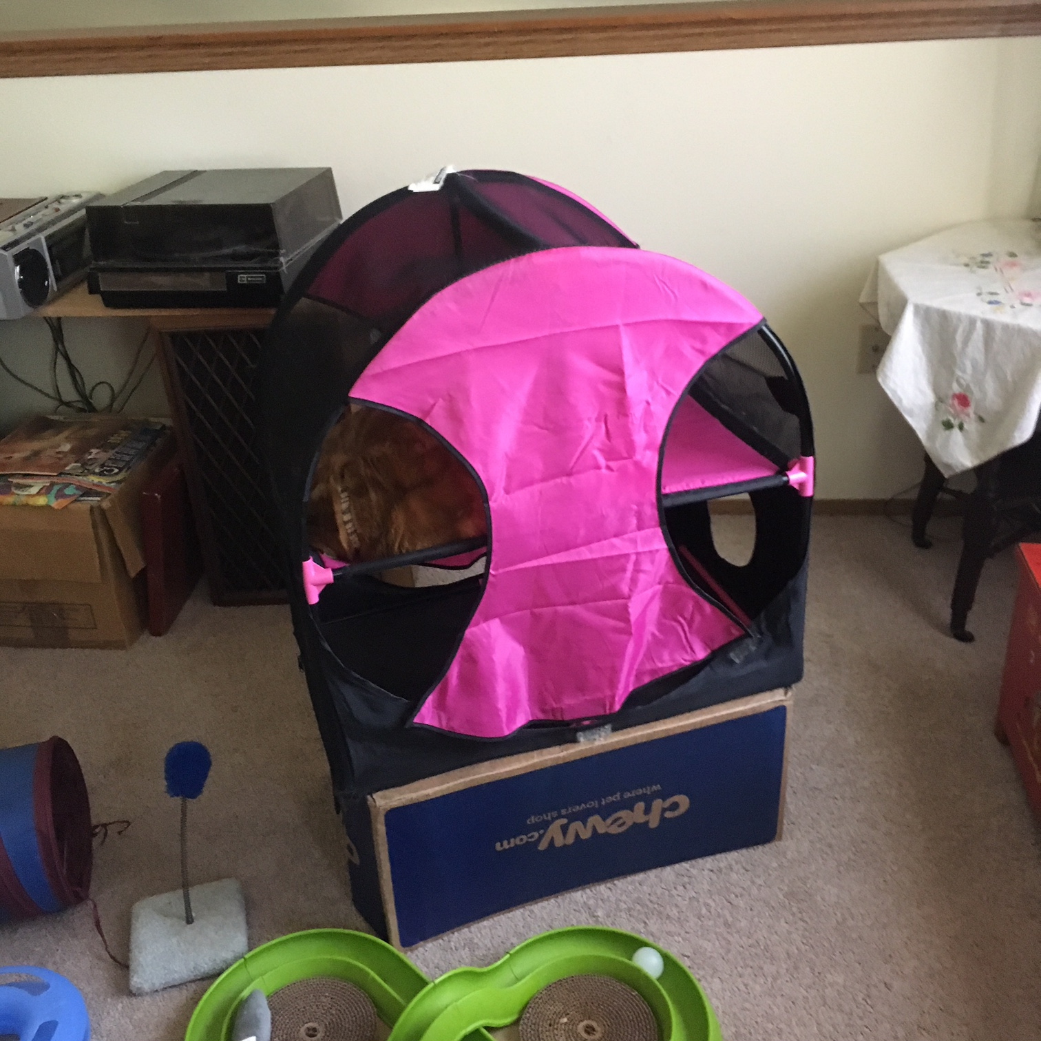 scooby cat cat condo