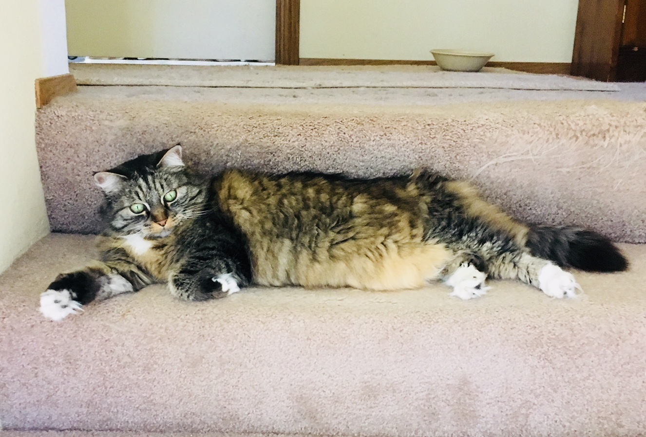 Opie cat on stairs
