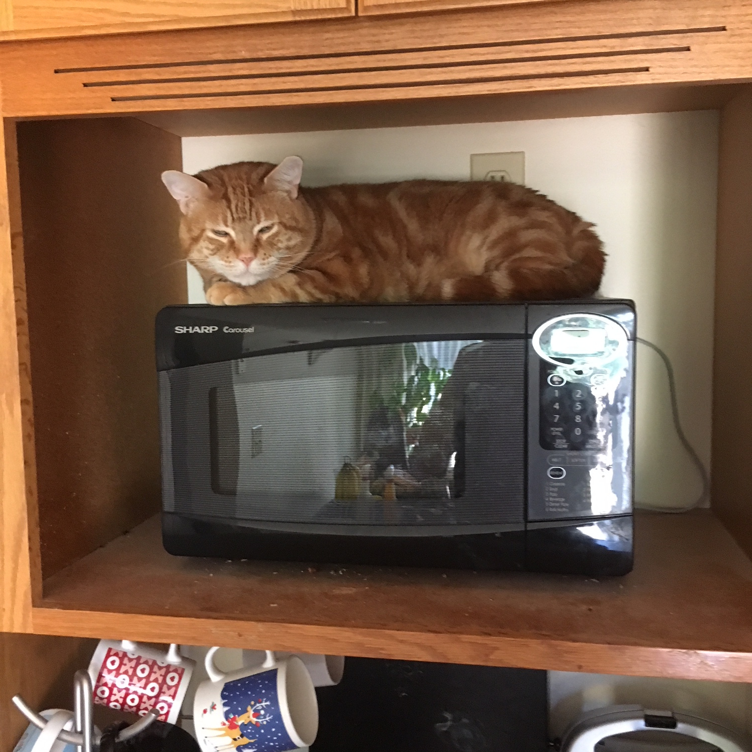 Scooby microwave