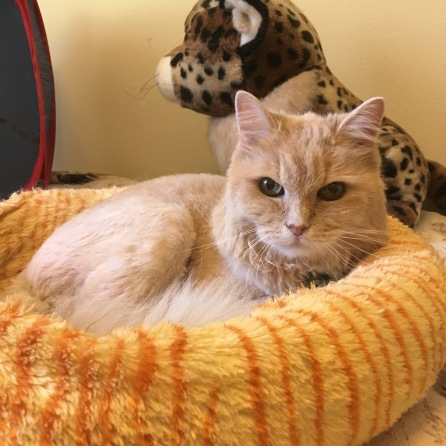 Marigold cat bed