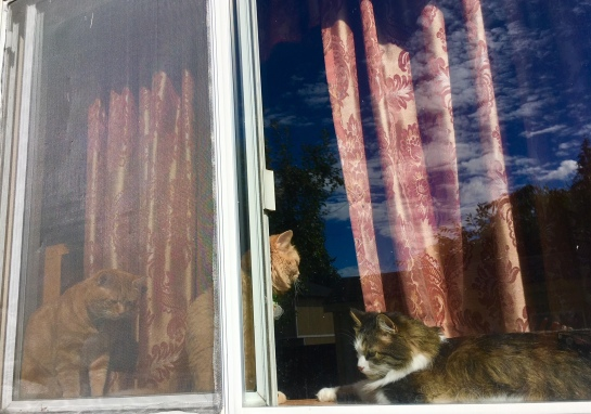 3 cats in window