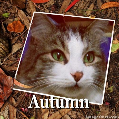 Zeke autumn header
