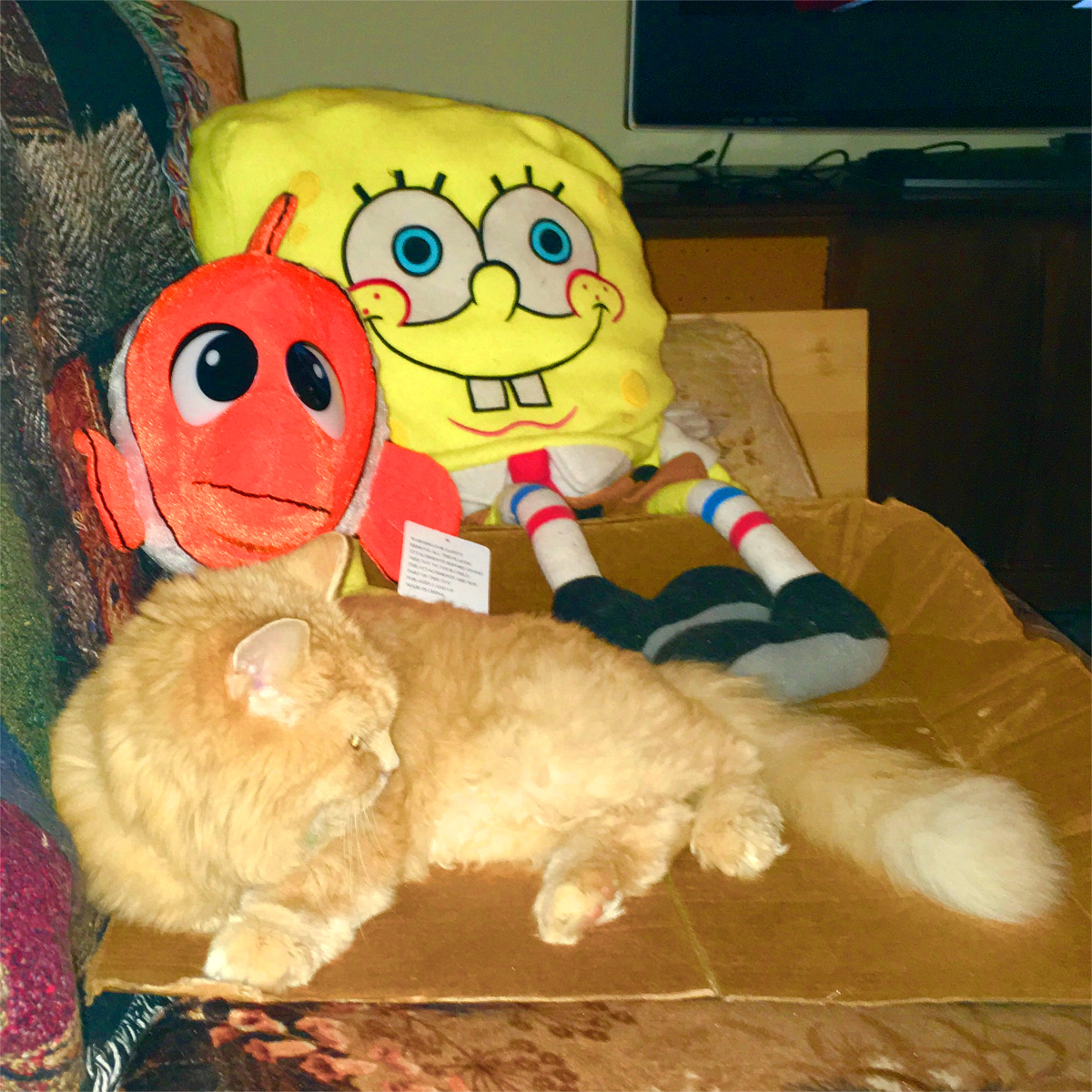 Marigold Nemo Spongebob