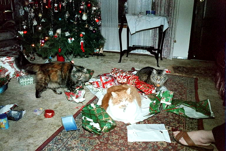3 cats christmas